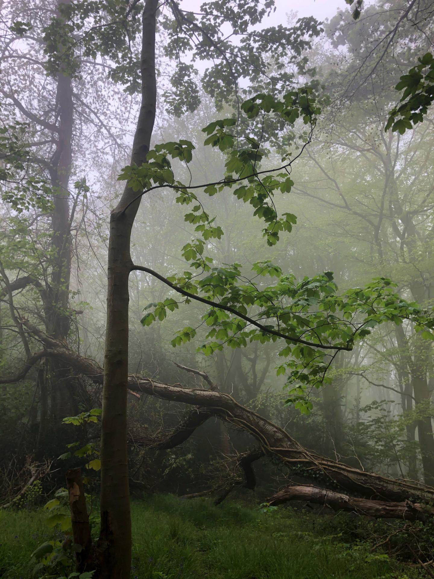 Nature vivante - Camille BOULLIER
